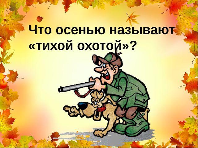 Что осенью называют «тихой охотой»?