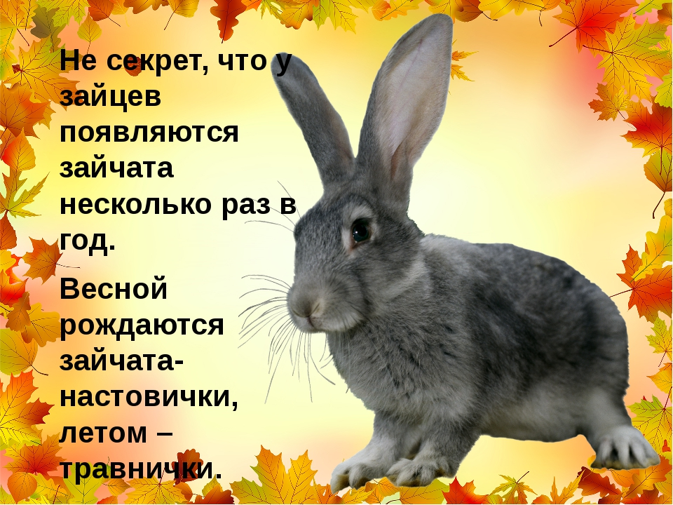 Не секрет, что у зайцев появляются зайчата несколько раз в год. Весной рождаю...