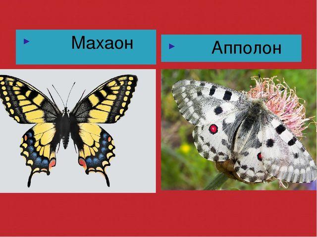 Махаон Апполон