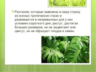 Растения, которые завезены в нашу страну из южных тропических стран и развива