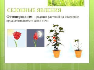Фотопериодизм – реакция растений на изменение продолжительности дня и ночи СЕ