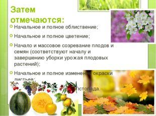 Затем отмечаются: Начальное и полное облиствение; Начальное и полное цветение