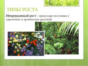 Непрерывный рост – происходит постоянно у однолетних и тропических растений Т