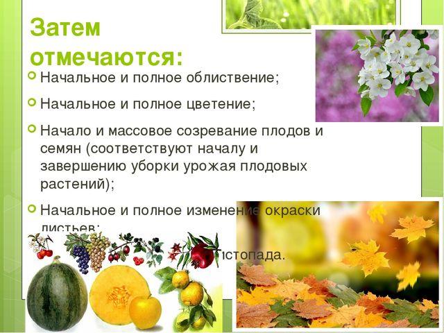 Затем отмечаются: Начальное и полное облиствение; Начальное и полное цветение...