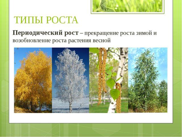 Периодический рост – прекращение роста зимой и возобновление роста растения в...