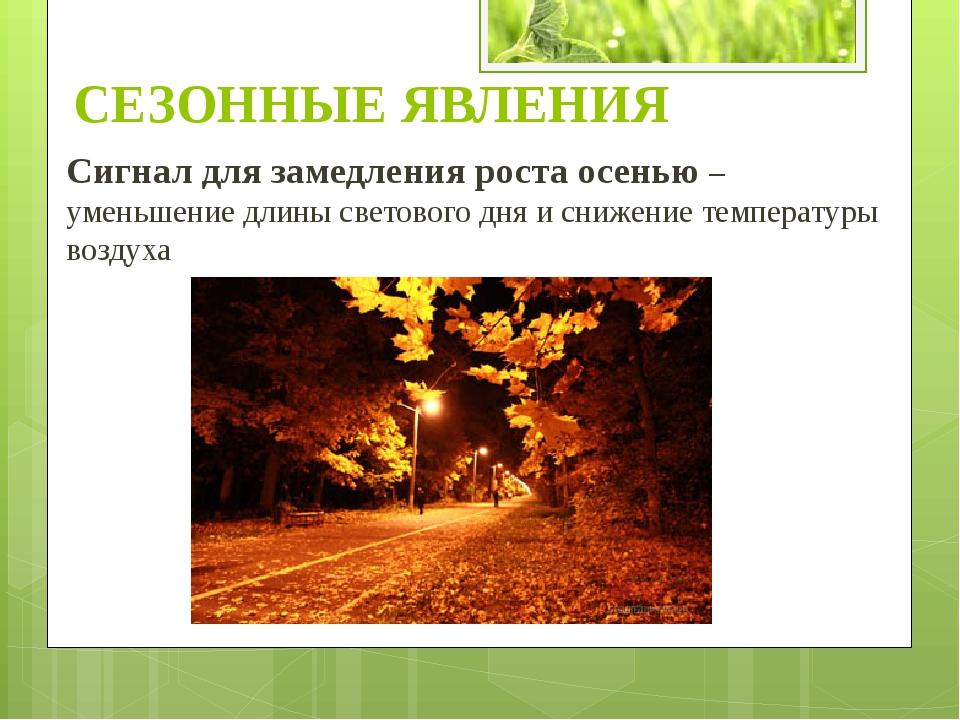 Сигнал для замедления роста осенью – уменьшение длины светового дня и снижени...