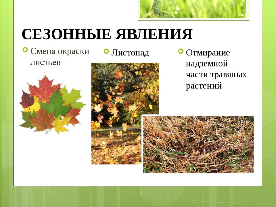 Смена окраски листьев Листопад Отмирание надземной части травяных растений СЕ...