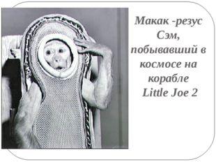 Макак -резус Сэм, побывавший в космосе на корабле Little Joe 2