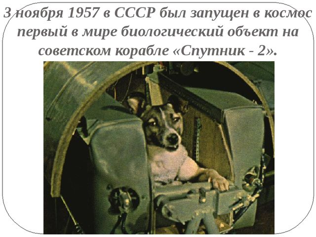 3 ноября 1957 в СССР был запущен в космос первый в мире биологический объект...