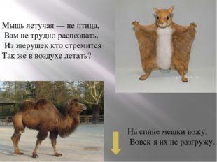 У лошадки рубашка — В полоску, как тельняшка. Конь есть конь, а не матрос. Чт