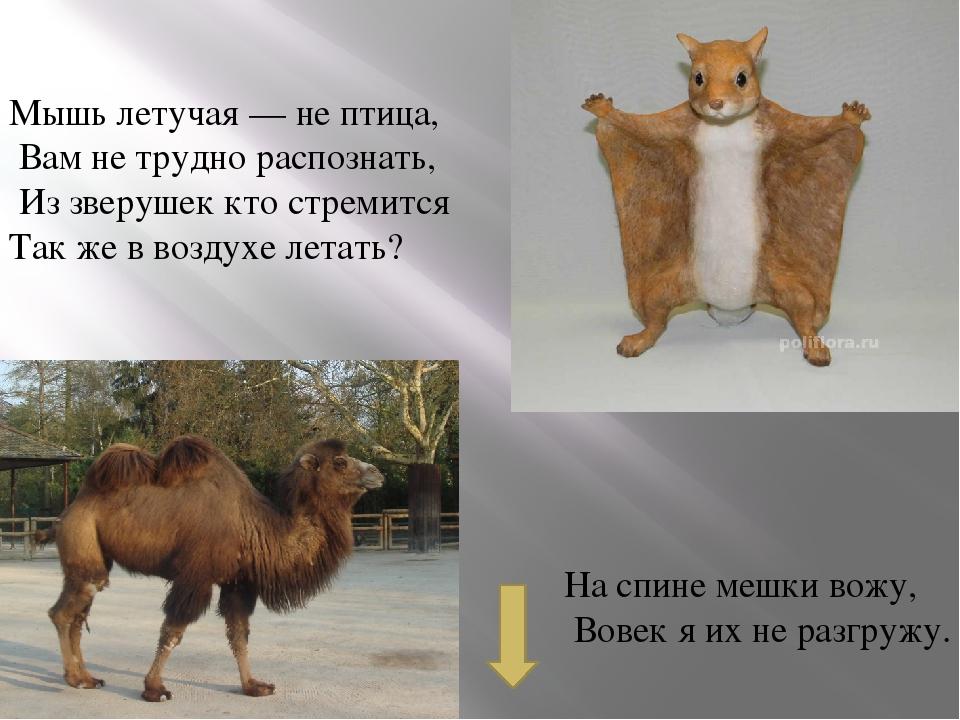 У лошадки рубашка — В полоску, как тельняшка. Конь есть конь, а не матрос. Чт...