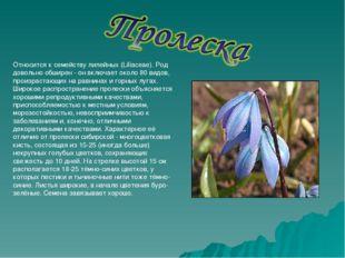 Относится к семейству лилейных (Liliaceae). Род довольно обширен - он включае