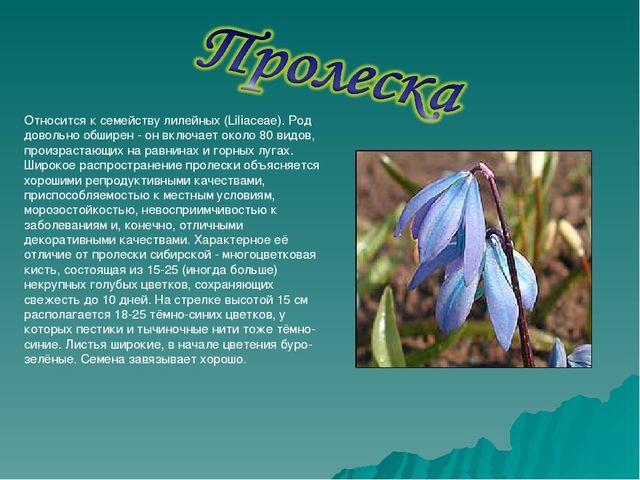 Относится к семейству лилейных (Liliaceae). Род довольно обширен - он включае...