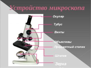 Устройство микроскопа Окуляр Объективы Винты Штатив Зеркало Тубус Предметный