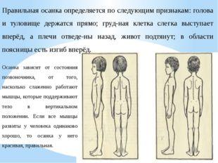 Правильная осанка определяется по следующим признакам: голова и туловище держ