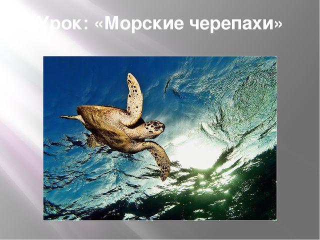 Урок: «Морские черепахи»