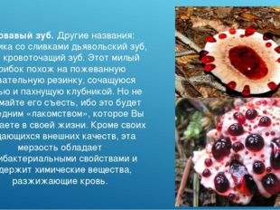Кровавый зуб. Другие названия: клубника со сливками дьявольский зуб, гриб кро