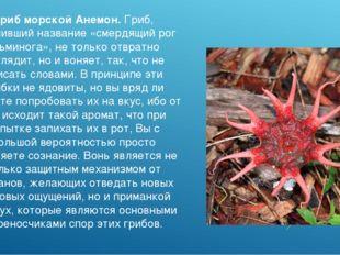 Гриб морской Анемон. Гриб, получивший название «смердящий рог осьминога», не