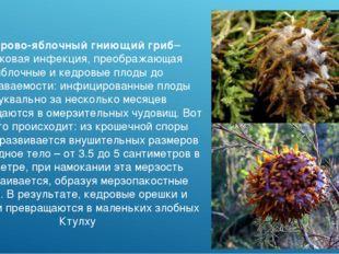 Кедрово-яблочный гниющий гриб– грибковая инфекция, преображающая яблочные и к