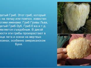 Бородатый Гриб. Этот гриб, который похож на лапшу или помпон, известен под мн
