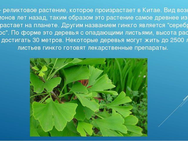 Гинкго - реликтовое растение, которое произрастает в Китае. Вид возник еще 16...
