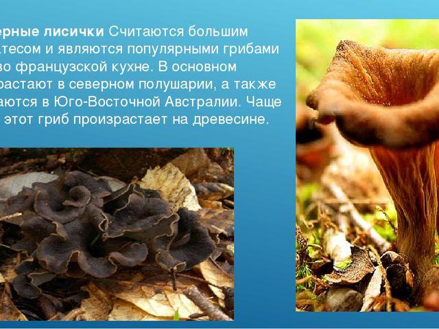 Черные лисички Считаются большим деликатесом и являются популярными грибами в...
