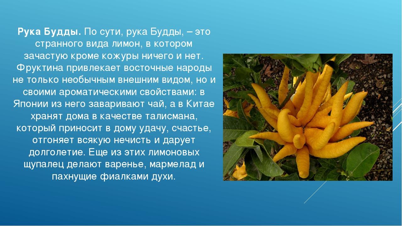 Рука Будды. По сути, рука Будды, – это странного вида лимон, в котором зачаст...