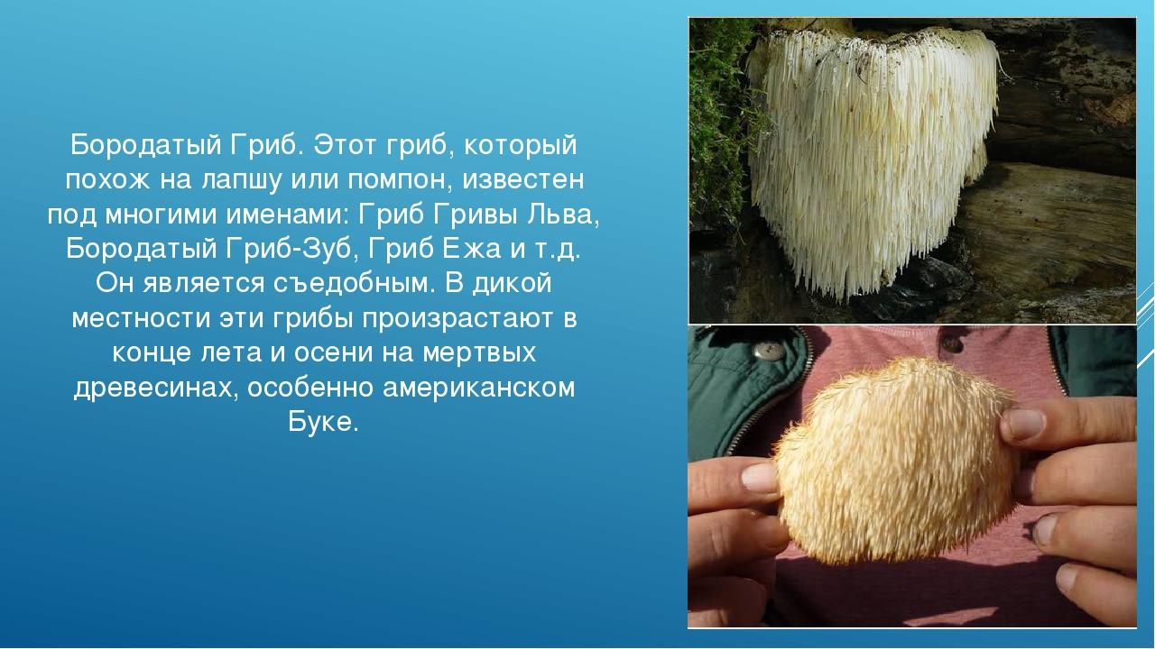 Бородатый Гриб. Этот гриб, который похож на лапшу или помпон, известен под мн...