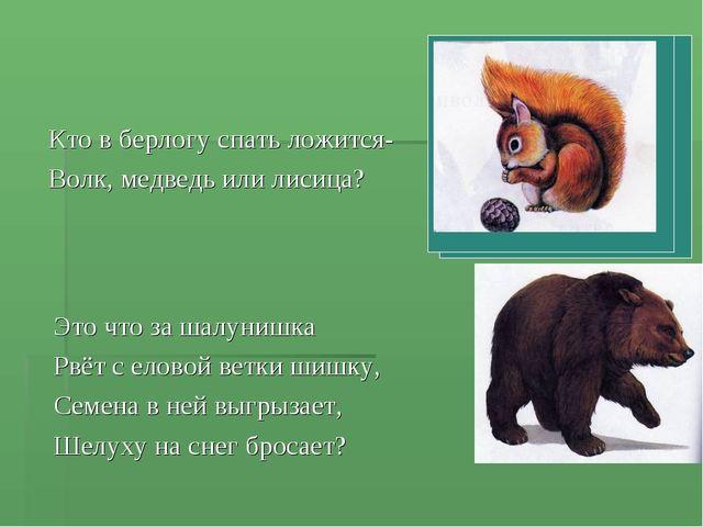 Кто в берлогу спать ложится- Волк, медведь или лисица? Это что за шалунишка Р...