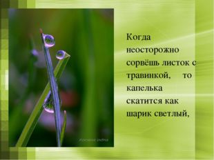 Когда неосторожно сорвёшь листок с травинкой, то капелька скатится как шарик