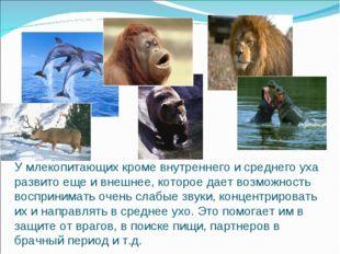 У млекопитающих кроме внутреннего и среднего уха развито еще и внешнее, котор