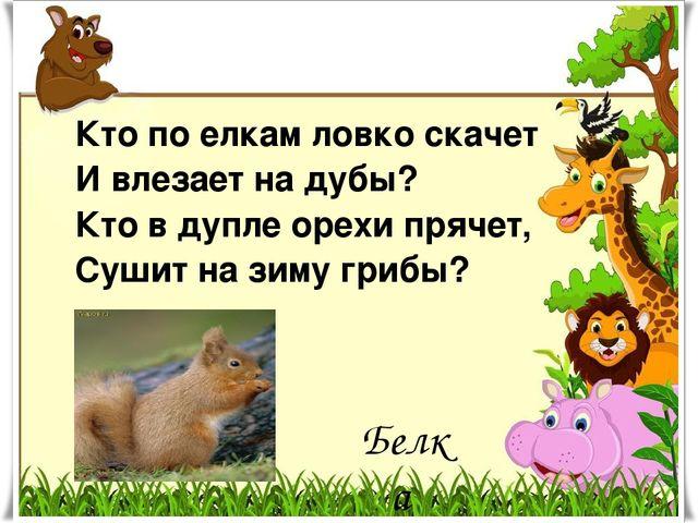 Кто по елкам ловко скачет И влезает на дубы? Кто в дупле орехи прячет, Сушит...