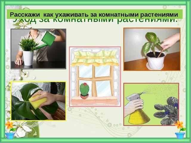 Расскажи как ухаживать за комнатными растениями