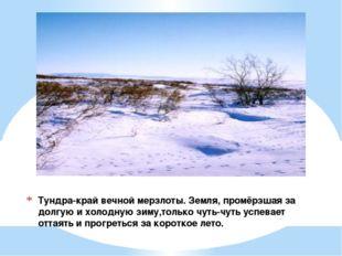 Тундра-край вечной мерзлоты. Земля, промёрзшая за долгую и холодную зиму,толь
