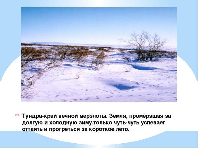 Тундра-край вечной мерзлоты. Земля, промёрзшая за долгую и холодную зиму,толь...