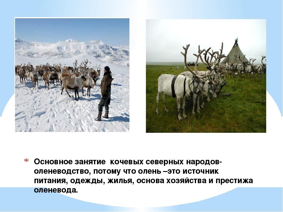 Основное занятие кочевых северных народов-оленеводство, потому что олень –это...