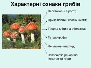 Характерні ознаки грибів Необмежені в рості; Прикріплений спосіб