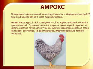 АМРОКС Птица имеет мясо – яичный тип продуктивности с яйценоскостью до 220 яи