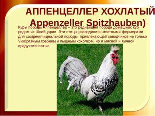 АППЕНЦЕЛЛЕР ХОХЛАТЫЙ (Appenzeller Spitzhauben) Куры породы Аппенцеллер – это