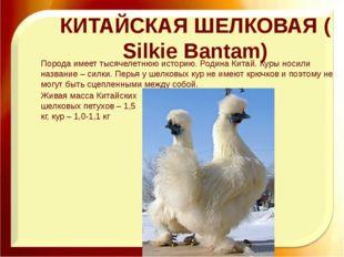 КИТАЙСКАЯ ШЕЛКОВАЯ (Silkie Bantam) Порода имеет тысячелетнюю историю. Родина