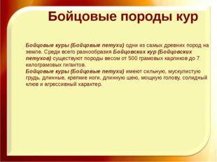 Бойцовые породы кур Бойцовые куры (Бойцовые петухи)одни из самых древних пор