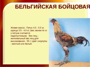 БЕЛЬГИЙСКАЯ БОЙЦОВАЯ Живая масса : Петух 4,5 - 5,5 кг, курица 3,5 - 4,0 кг,