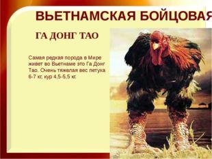 ВЬЕТНАМСКАЯ БОЙЦОВАЯ Самая редкая порода в Мире живет во Вьетнаме это Га Донг