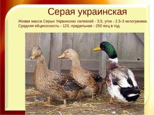 Серая украинская Живая масса Серых Украинских селезней - 3,5, уток - 2,5-3 ки