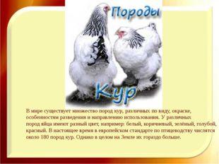В мире существует множествопород кур, различных по виду,окраске, особенност