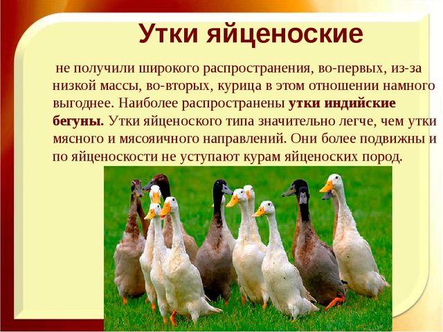 Утки яйценоские не получили широкого распространения, во-первых, из-за низко...