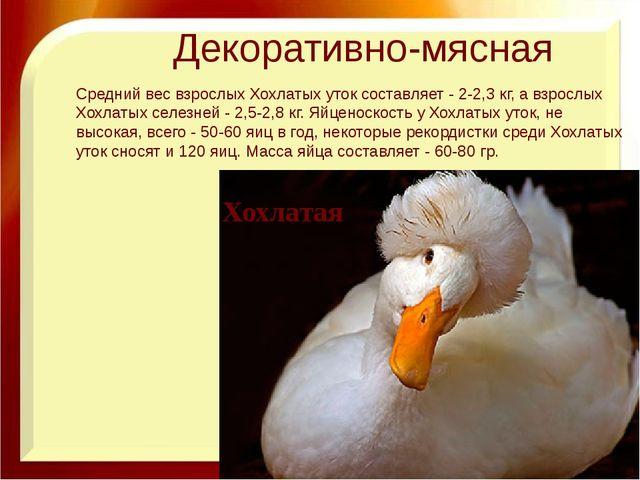 Декоративно-мясная Хохлатая Средний вес взрослых Хохлатых уток составляет - 2...
