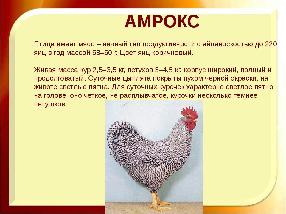 АМРОКС Птица имеет мясо – яичный тип продуктивности с яйценоскостью до 220 яи...