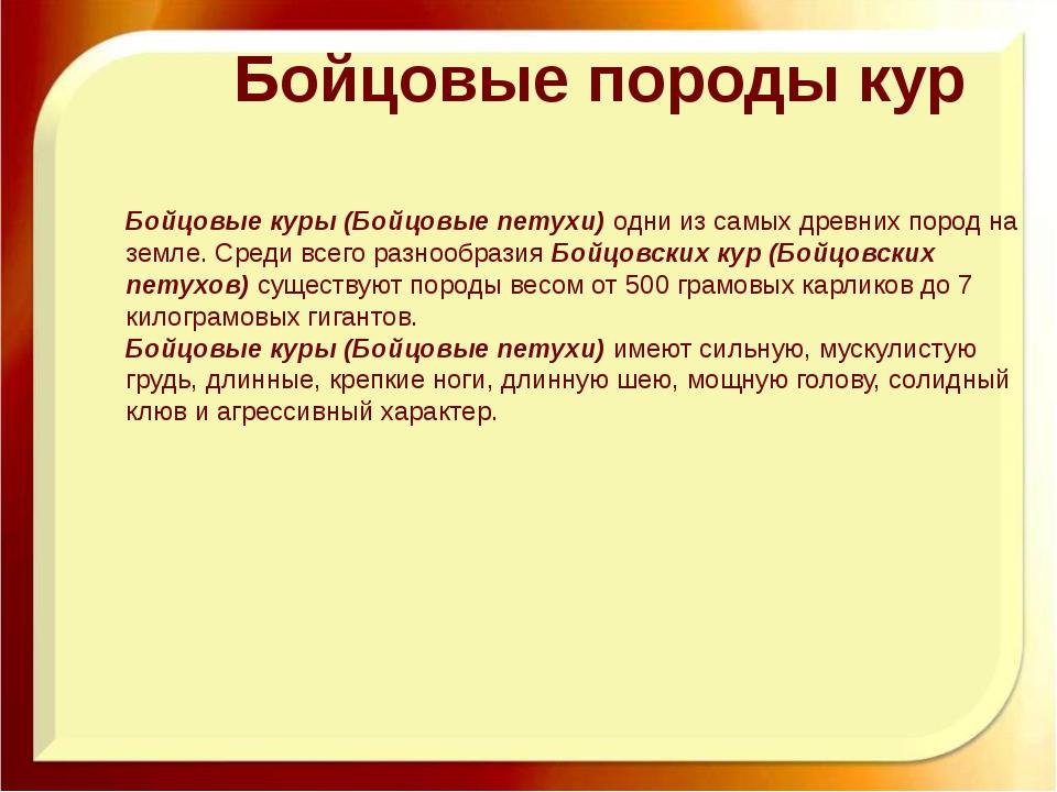 Бойцовые породы кур Бойцовые куры (Бойцовые петухи)одни из самых древних пор...