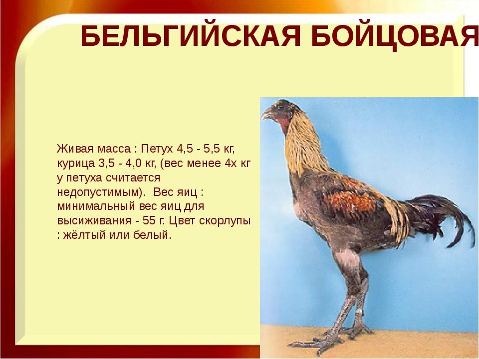 БЕЛЬГИЙСКАЯ БОЙЦОВАЯ Живая масса : Петух 4,5 - 5,5 кг, курица 3,5 - 4,0 кг,...